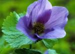 violetta6xp.jpg